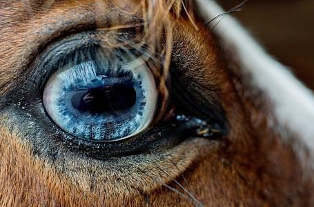 Koně mají oči krásné a smutné.
