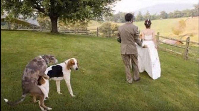 Největší trapasy ze svateb