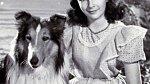 Příběh o Lassie Elizabeth Taylor proslavil.