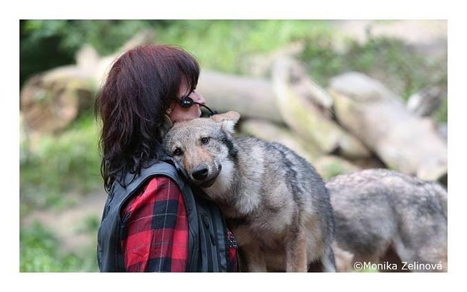 Vlci Tanju následují a respektují jako hlavní samici smečky.