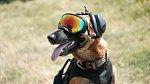 Cti se tu dostává i vojenským psům, kterých je hodně.