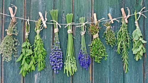Bylinky: 5 druhů vhodných na balkon či parapet