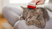 Bez pravidelného vyčesávání se dobré vztahy mezi člověkem a kočkou budují těžko.
