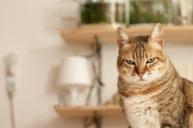 Kočky bývají členem rodiny. Jsou-li odsunuté stranou, cítí se ublížené a dělají naschvály.