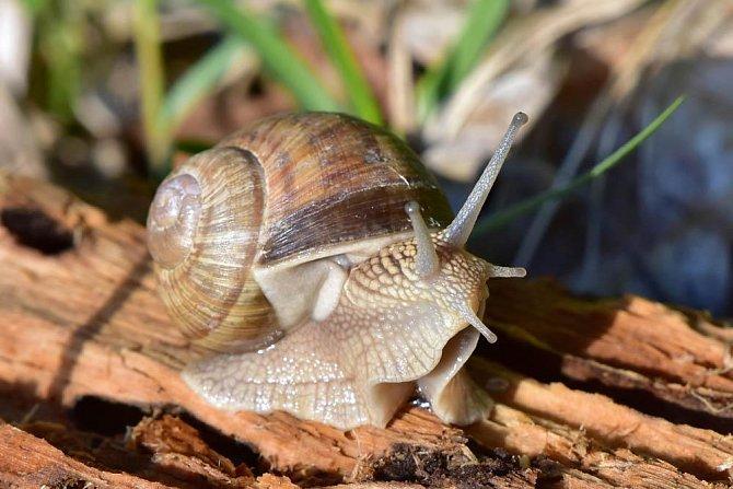 Formikofilie: Jedná se o variantu zoofilie, kdy je sexuální zájem soustředěný hlavně na drobné živočichy (mravenci, šneci, hmyz, žáby). Přikládají si je na tělo, hlavně přirození.