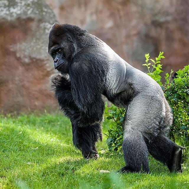 Zoo Praha je pravidelně mezi pěti nejlepšími zoologickými zahradami na světě!