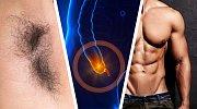 Neužitečné části těla: Proč je má každý z nás, i když je vlastně nepotřebuje?