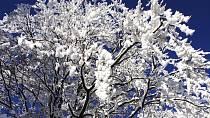 Soutěž o TOP zimní fotku