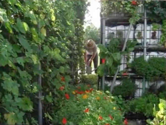 Barák udělanej čistě ze zeleniny, aby šetřil životní prostředí