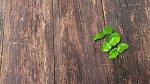 Ilustrační foto - dřevěná podlaha