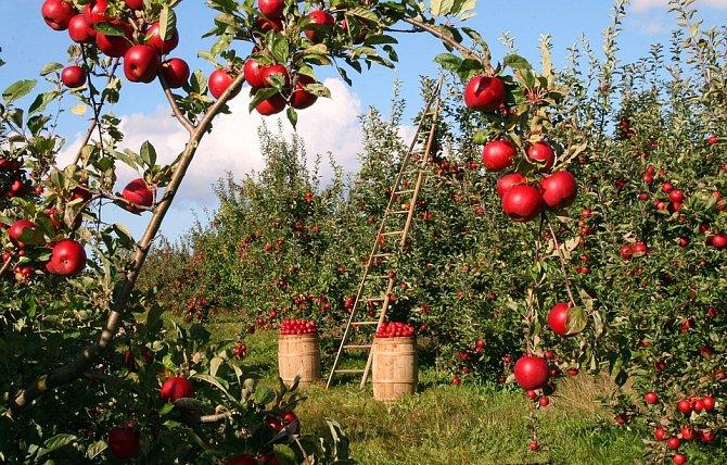 """Domácí úroda není méně zdravá než exotické """"superpotraviny"""""""