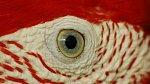 Oko papouška je více než zajímavé.