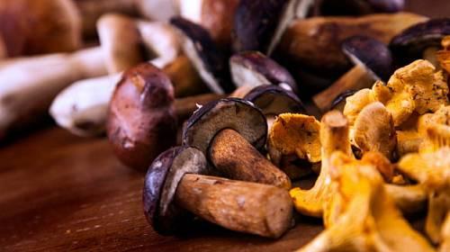Houbová sezóna je tady! Vyzkoušejte naše skvělé tipy, jak připravit houby!