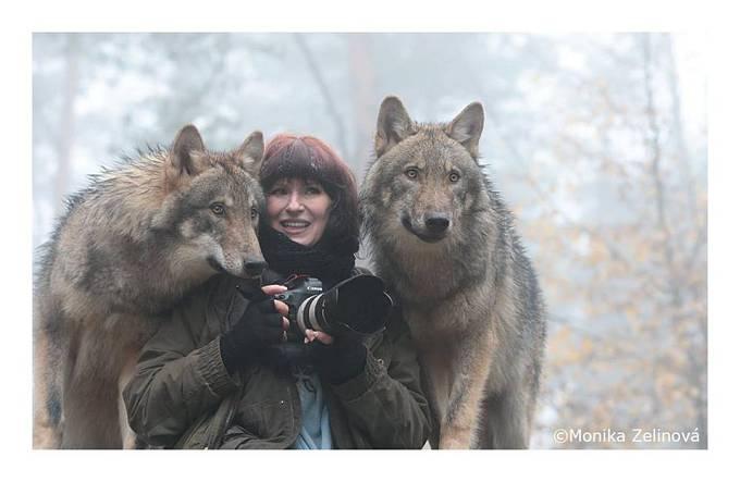 Život s vlky je prý skvělý.