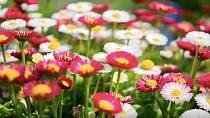 V historii lidé spíše zapáchali! Když už se voněli, tak to byla šlechta a používala k tomu živé rostliny.