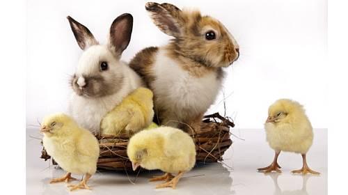 Znáte všechny symboly Velikonoc?