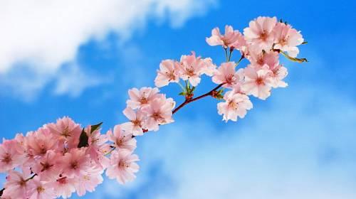Výsledek obrázku pro květen