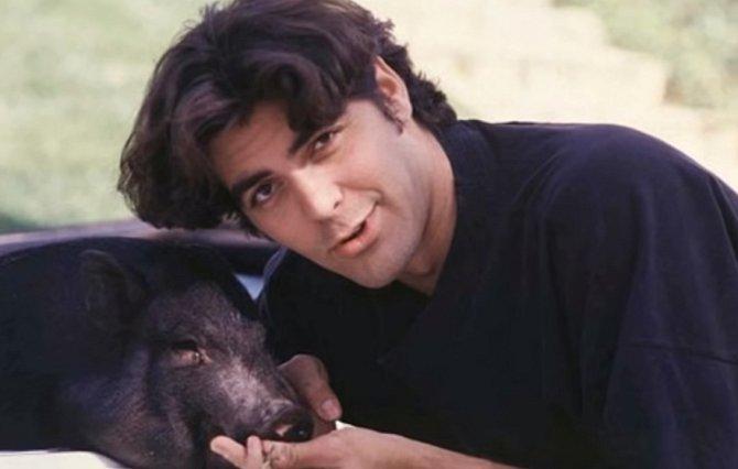George je také velký milovník zvířat. Prasátko Max s ním žilo dlouhých 18 šťastných let. George ho měl od svých 27 let a když Max zemřel, hodně dlouho mu trvalo než se z toho dostal.