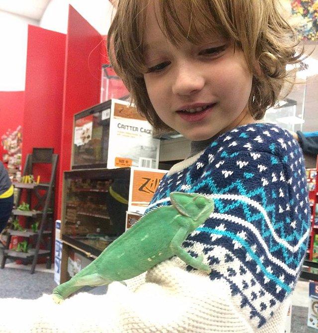 Henryho kamarád chameleon Chuck.