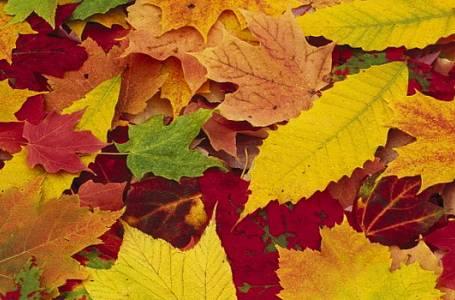 Sedm TOP podzimních radostí