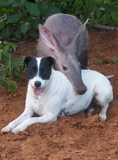 Další přátelská dvojice je Gertie (hrabáč) a fenka Coco.