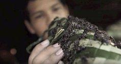 """V Amazonii museli mladí jednoho z kmenů """"nosit na rukách rukavice"""" z mravenců. Jde ovšem o velmi agresivní druh, který po deseti minutách dotyčného paralyzuje na 24 hodin."""