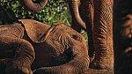 National Geographic slaví výročí 125 let: Kupte si speciální narozeninové číslo