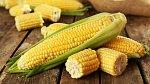 Kukuřice je hodně oblíbená po celém světě.