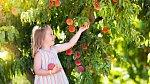 Spousta rodin dává přednost biokvalitě hlavně kvůli dětem.