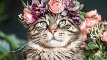 Květinové čelenky frčí!