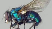Na nohách jedné mouchy lze nalézt až 5 miliónů choroboplodných zárodků.