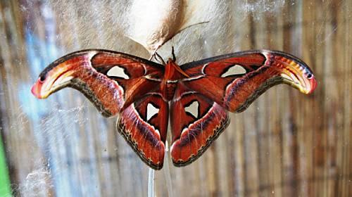 Tipy na víkend: Motýli, Peříčko, Řekni to po svém a Noc s Andersenem
