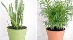 Další způsob je pořídit si aromatické květiny nebo bylinky.