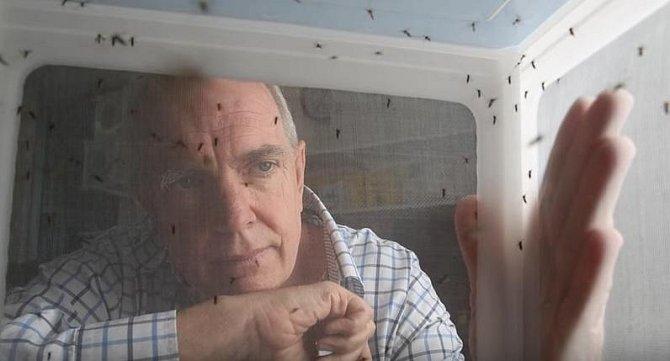Vědec zkoumajicí komáry