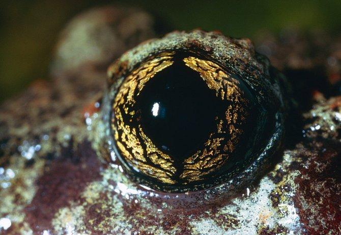 Žáby mají kouzelná očka.