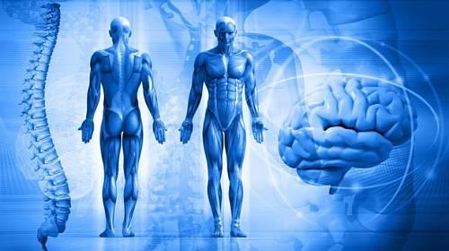 Test: Víte, jak pracuje lidské tělo?