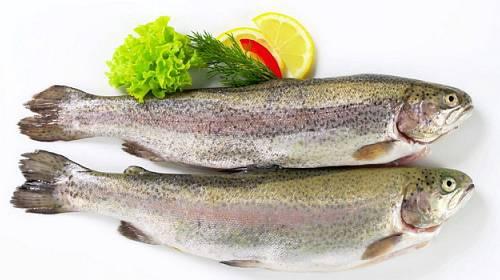 Předplaťte si časopis Gurmet a získejte 5 čerstvých ryb