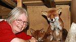 Mít doma lišku není prý žádná sranda.