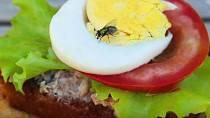 Jakmile moucha usedne na potravinu, dochází k přenosu bakterií.