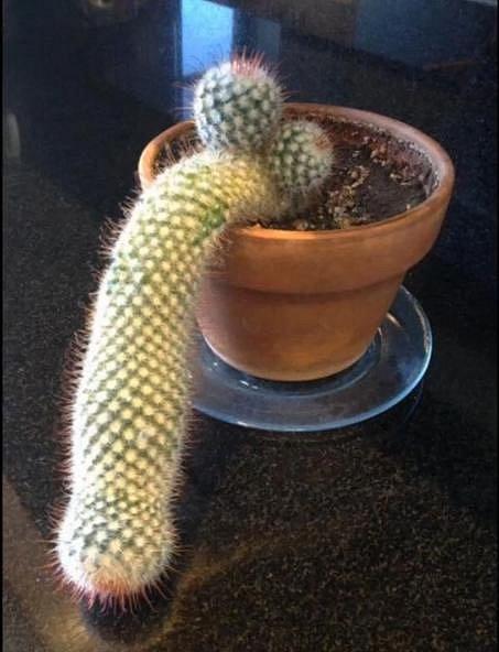 Optické iluze - jenom kaktus