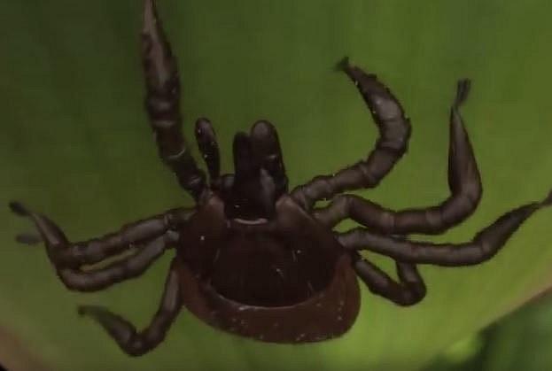 Klíště je jeden z nejkomplikovanějších parazitů vůbec a bohužel také jeden z nejméně probádaných...