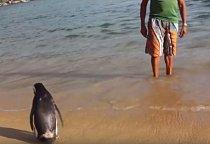 Staral se o tučňáka týden, než se dostal z nejhoršího a po té jej chtěl vrátit zpět do volné přírody. Din Din ale o to nestál a zdržel se u svého zachránce 11 měsíců.