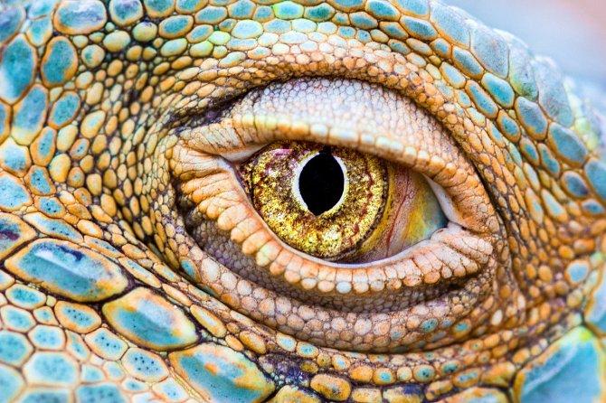 Oko gekona. Zajímavé.