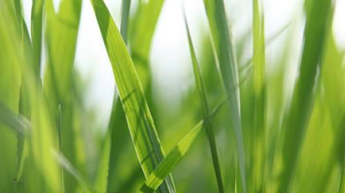 Jak málo toho víme o biokosmetice