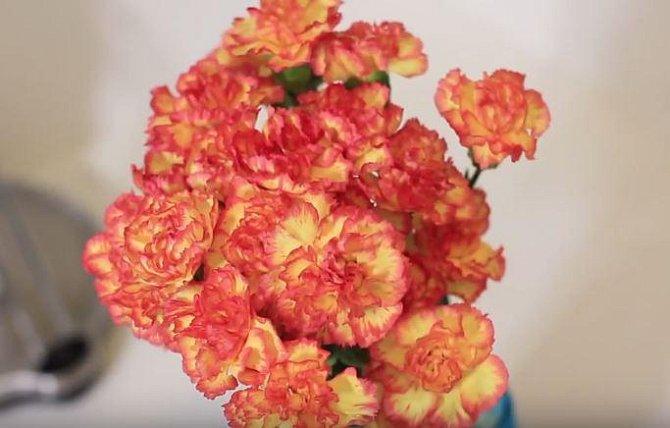 Nalijte trochu octa do vody ve váze a kytice bude vypadat krásně mnohem déle.