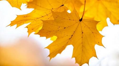 Horký kafe z redakce: 5 věcí, na které se těším v říjnu