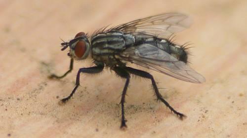 Co se stane s jídlem, když na něj sedne moucha