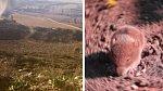 Orel je schopný zachytit kořist na 300 metrů.