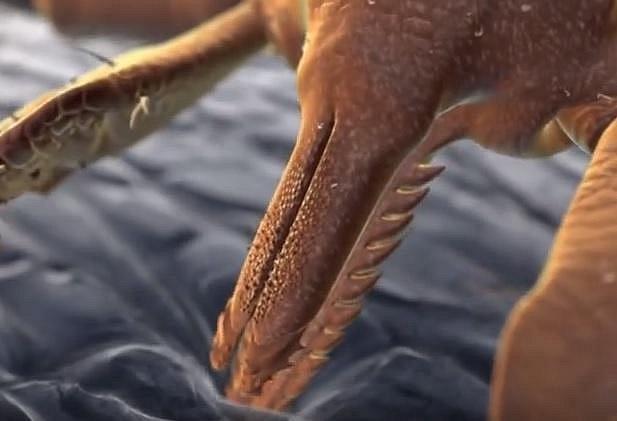 Existuje asi 800 druhů klíšťat, ale jen 8 druhů může přenášet nebezpečnou infekci.
