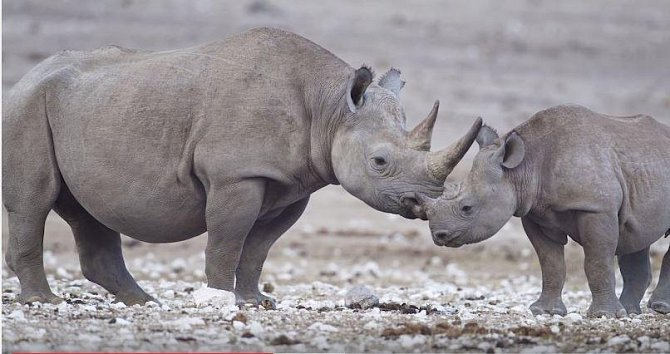 Se spousty zvířat se budeme muset navždy rozloučit...